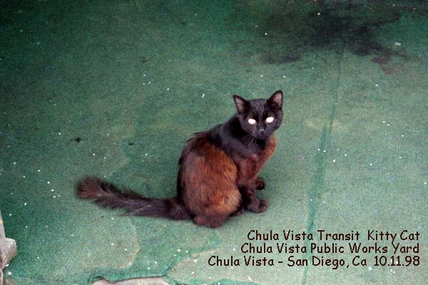 chula vista kitty cat